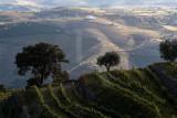 Região do Alto Douro