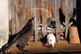 Os Gatos de Abíul