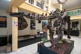 Ossos originais com 150 milhões de anos