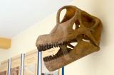 Brachiosauros (Réplica do Crânio)