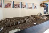 Dinheirosaurus - Vértebras Originais e Gastrólitos