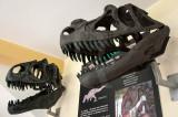 Allosaurus fragilis e Ceratosaurus nasicornis