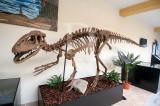 Lourinhanosaurus antunesi (Lagarto da Lourinhã dedicado a [Telles] Antunes)