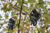 Os Macacos de Bordalo