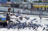 Os Pombos de Aveiro