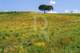 Landscapes in Alentejo