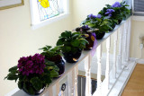 May 2015 - Mom's flowers in her apartment at Wendy's
