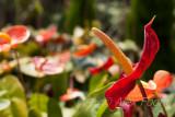 Macro & Close-up; Flora