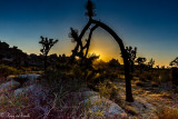 Joshua Tree National Park 2014