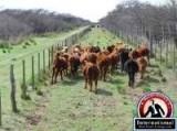 Santa Rosa, La Pampa, Argentina Farm Ranch  For Sale - FIELD SALES IN ARGENTINA LA PAMPA