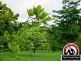 Belmopan, Cayo District, Belize Lots Land  For Sale - Beautiful One Acre