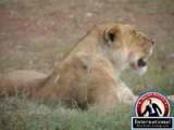 Narok, Reef Valley, Kenya Lots Land  For Sale - Maasai Mara Land for Sale