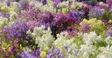 toowoomba flowers 1.jpg