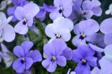 toowoomba flowers 2.jpg