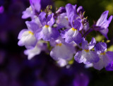 toowoomba flowers 6.jpg