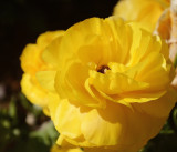 toowoomba flowers 7.jpg