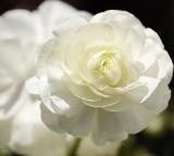 toowoomba flowers 8.jpg