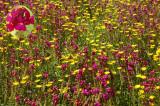 toowoomba flowers 9.jpg