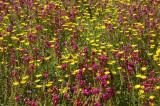 toowoomba flowers 10.jpg