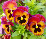toowoomba flowers 3.jpg
