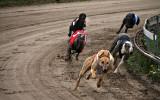 Hundkapplöpning, Tommarp