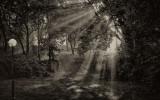 Solstrålar i morgondis (SilverEfex2)