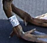 Cinnamon Teal Leg Band (3181)