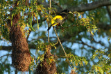 Birds of the Pantanal and Southern  Brazil