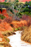 The Beauty Of Palo Duro Canyon State Park