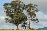 Landscapes in Victoria, Au
