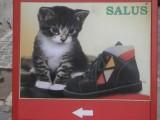 Un des buts d'internet est d'y publier des photos de chatons mignons