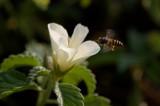 Flora -- Fauna