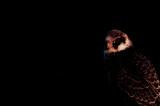 Roodpootvalk in laatste licht.jpg