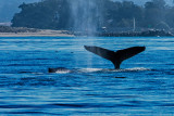 Whale Watching from Moss Landing, CA