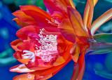 Cactus/Succulent Flowers