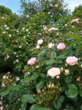 DSC08687 Bouquet parfait.JPG