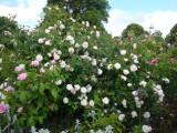 DSC08775 Bouquet blanc.JPG