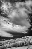 Boulder Mountain Aspens