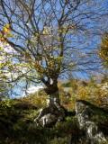 L'arbre qui aime son caillou