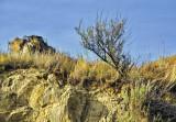 _SDP6966pb.jpg    soil erosion