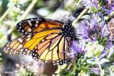 Shipley Nature Center Butterfly 9-30-13 (4).jpg