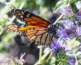 Shipley Nature Center Butterfly 9-30-13 (5).jpg