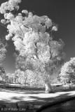 Infrared CM Park 1-14-14 (31) Tree.jpg