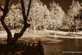 Infrared CM-12-31-13 (12) Ducks.jpg