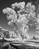Infrared CM-12-31-13 (27) Tree.jpg