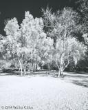 Infrared Library 1-6-14 4.jpg