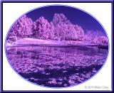 Infrared CM Park 1-14-14 (13) Blue.jpg