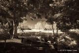 Infrared MS Park-12-31-13 7 Choc.jpg