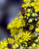 Bees + Yellow Flowers HB (1).jpg