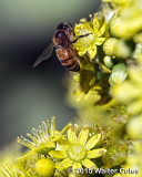 Bees + Yellow Flowers HB (4).jpg